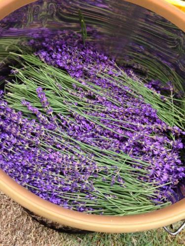 旅の記念にオリジナルのアロマグッズを青森県産の香りで簡単手作り♪ あおもりアロマクラフト講座