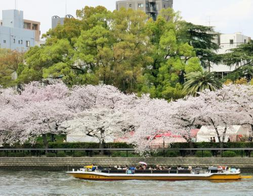 【大阪シティクルーズ推進協議会共同企画】桜の季節限定 大川さくらクルーズ