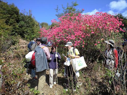 太平洋の絶景が待っている! 島ならではの観音道トレッキングを楽しむ「島野古道」
