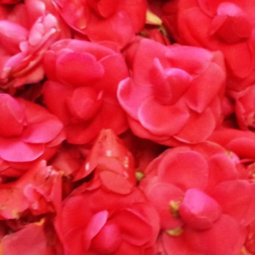 鮮やかな花びらで染めています。