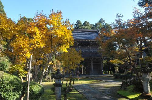 林泉寺の壮大さを紅葉と共に。