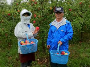 JAPANプレミアム「弘前りんご」ブランド構築プロジェクト