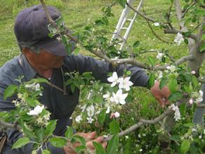 果実だけでなく、花や木、根に至るまで「まるごと商品化」を目指す