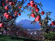 弘前市りんごの公園