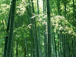 """TAKE1""プロジェクト 竹原産の特別な筍を利用した商品開発と販路開拓"