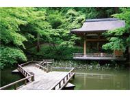 産業と文化の集散地「市場町・加茂」のルーツをたどる 調査研究事業