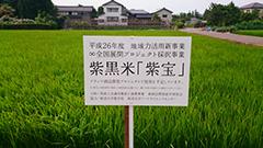 農商工連携事業 産学連携による「食×食道具」特産品開発