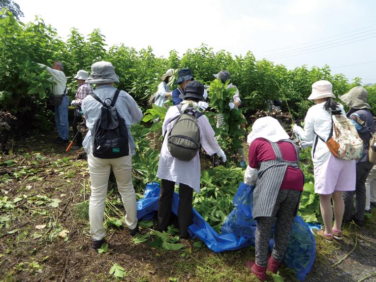 桑やシルクを地域資源とした体験型観光プログラムの開発