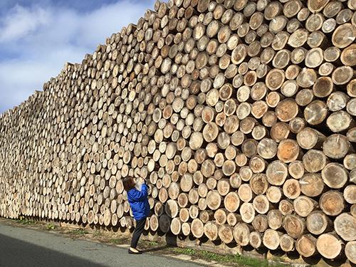 森が育む暮らしをコンセプトにした産業観光商品開発プロジェクト