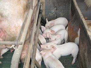 地元農畜産物を活用した地域ブランド化計画を策定